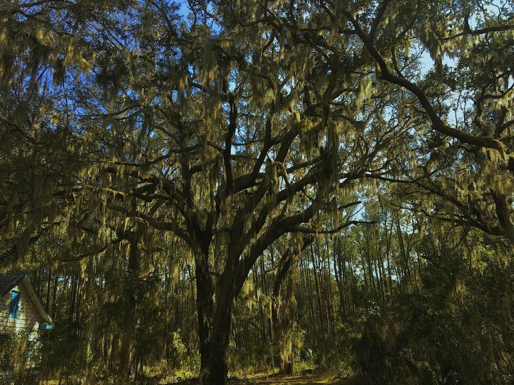 Oak & Moss